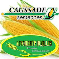 Семена кукурузы Коссад Семанс