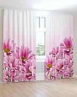 Фотошторы цветы хризантемы розовые