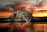 Фотообои 3D (флизелин, бумага, 312х219, 368х254, 416х254) Леопард, ягуар (126CN)