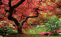 Фотообои 3D 368x254 см Красное дерево (270P8)