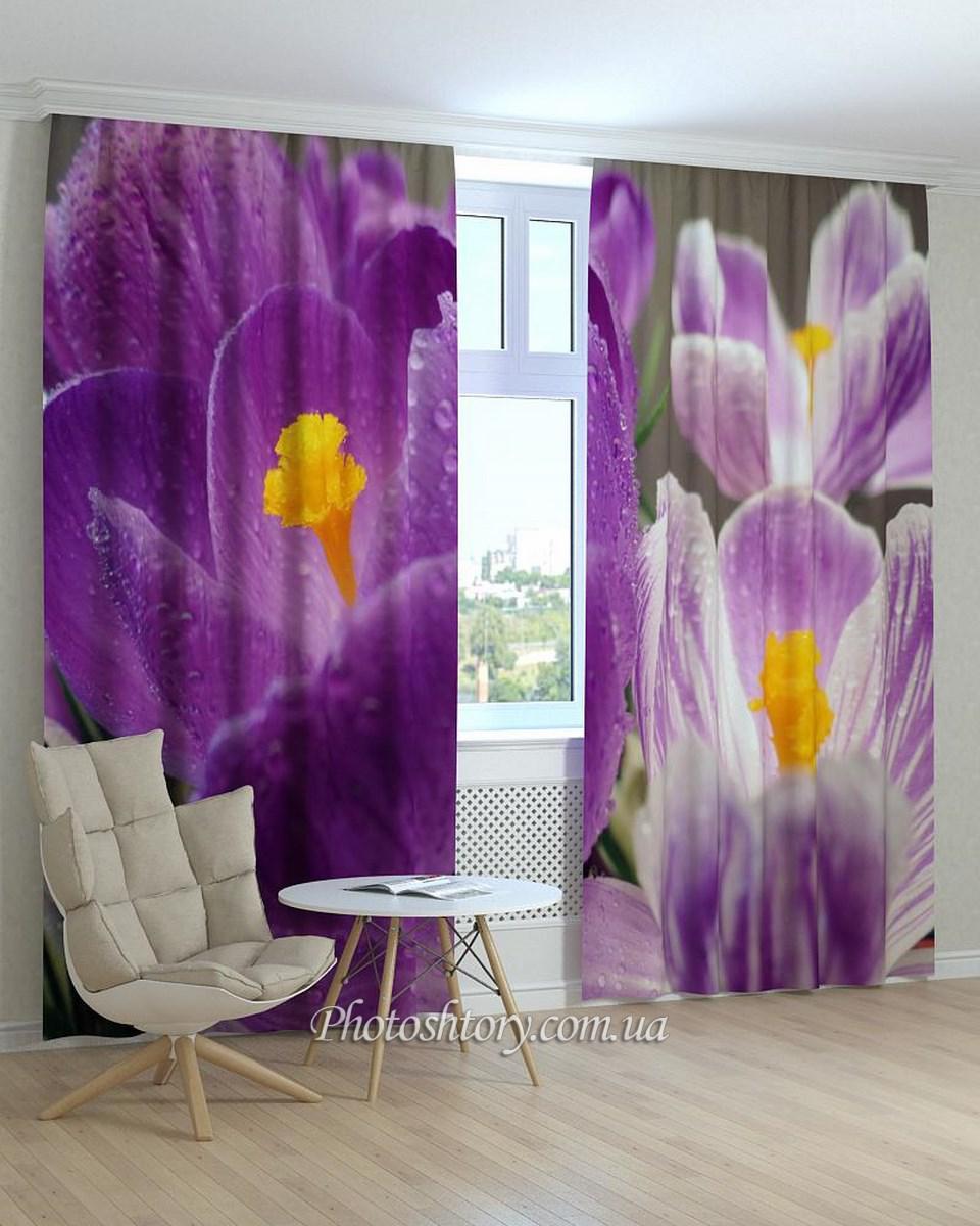 Фотошторы цветы крокусы макро