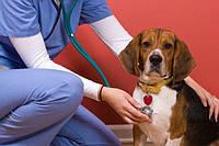 В каком случае нужна помощь ветеринара.