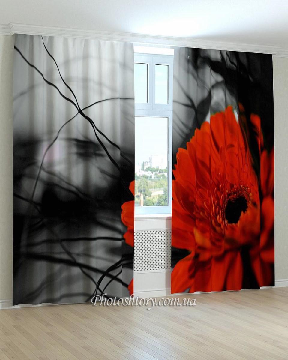 Фотошторы гербера красная на черно-белом фоне