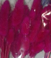 Сухоцвет Лагурус -зайцехвост)малиновый