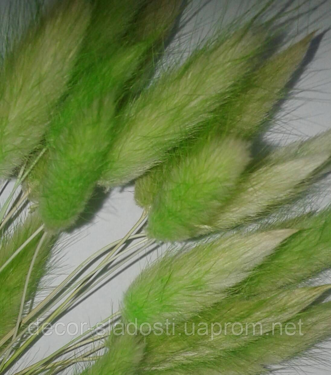 Сухоцвет лагурус салатовый (10штук в пучке)