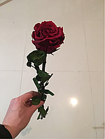 Роза стабилизированная Verdissimo Красная, фото 4