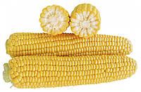 Кукуруза 1707 F1 2500 сем. Ларк Сидз.