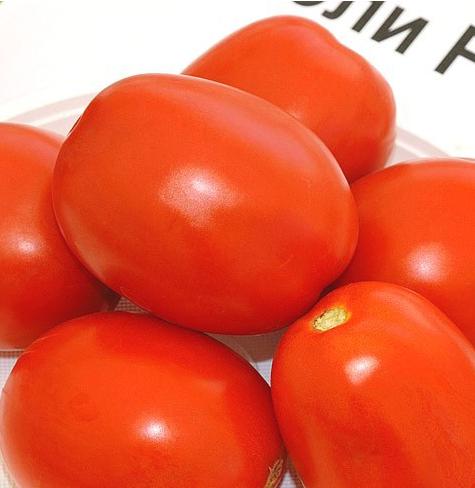 Чибли F1 - семена томата, Syngenta