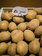 Картопля Воларе 1кг (1 РП) (Агріко) ТМ Добрі Сходи