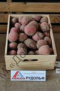 Картопля Рудольф 1кг (1 РП) (Агріко) ТМ Добрі Сходи