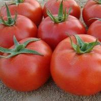 Сагатан F1 - семена томата, Syngenta