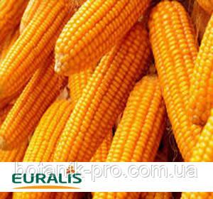Насіння кукурудзи ЄС Зізу
