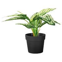 ФЕЙКА Искусственное растение в горшке, диффенбахия, 21 см, 60359425, IKEA, ИКЕА, FEJKA