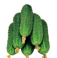 Семена огурца Пасалимо F1, Syngenta 500 семян