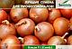 Семена лука Кенди (Кэнди) / Candy F1 250 000 семян Seminis , фото 6