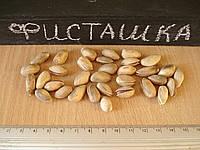 Семена фисташки орехи для сеянцев и саженцев, горіх насіння фісташкі