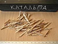 Катальпа бигониевидная семена для выращивания саженцев, насіння