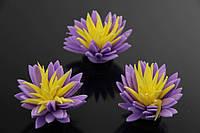Цветок декоративный Libertia, диаметр 3,5 см, цвет фиолетовый с желтой серединой, фоамиран, декоративные цветы, цветы исскуственне для рукоделия