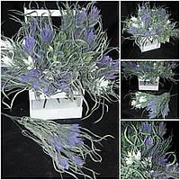 Ятрышник припудренный - интерьерные цветы,  выс. 35-40 см., 50\40 (цена за 1 шт. + 10 гр.)