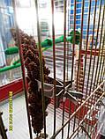 Тримач для сепії, фруктів для птахів, фото 5