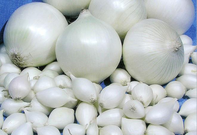 Лук-севок Гледстоун (GLADSTONE), Нидерланды, 1 кг