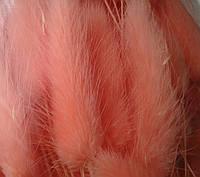 Сухоцвет лагурус персиковый