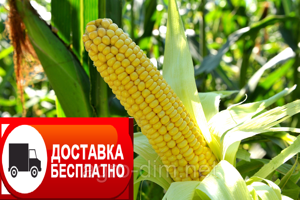 Семена кукурузы ТАР-349 МВ