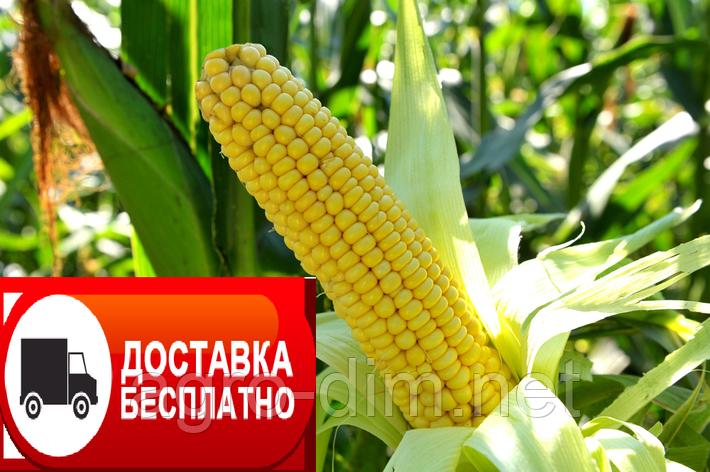Семена кукурузы ТАР-349 МВ, фото 2