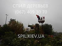 Спилювання аварійних небезпечних дерев Зрізання аварійно-небезпечних гілок і дерев, фото 1