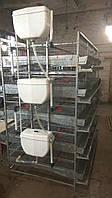 Клеточное оборудование БКП-5-600 для содержания перепелов-несушек