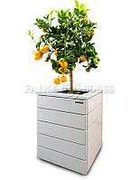 """Горшок для цветов из дерева """"Амели"""""""