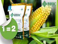 Предложение « ГРАНЫ ВЕСНЫ» - Акция на семена кукурузы ВНИС