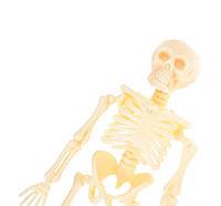 Іграшковий скелет людини, фото 1