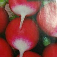 Семена редиса Редис Красный с белым кончиком 20г.
