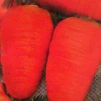 Семена моркови Малышка Коротышка 15г.