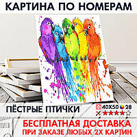 "Картина по номерам ""Пёстрые птички"" 40х50 см"