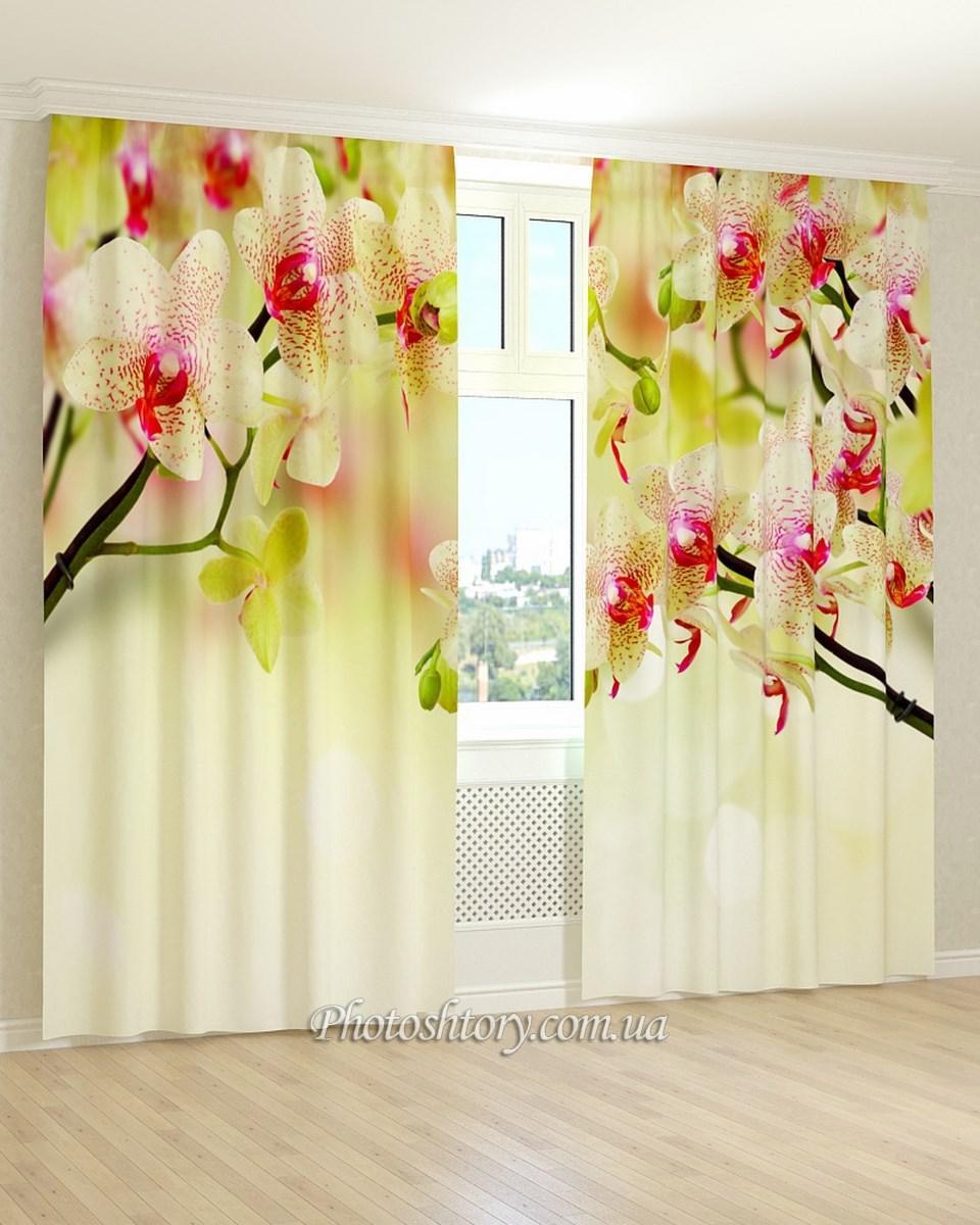 Фотошторы кремово-розовая орхидея
