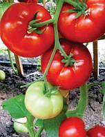 Фантастина F1 - семена томата, Syngenta