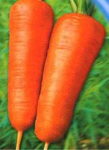 Семена моркови Шансон Роял