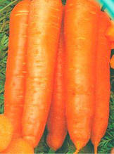 Семена моркови Амстердамская (имп)