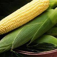 Спирит F1 - семена кукурузы, Syngenta