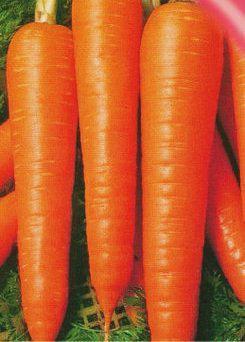 Семена моркови Вита Лонга 25 г, фото 2