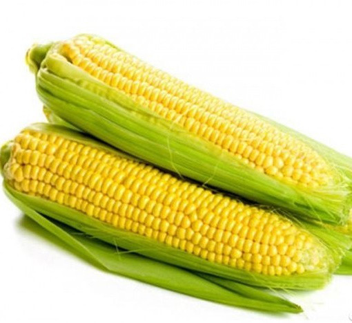 Шайнрок F1 - семена кукурузы, Syngenta