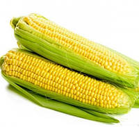 Семена кукурузы Шайнрок F1, Syngenta 100 000 семян