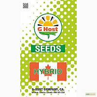 Семена кукурузы G Host GS 115 В34 (Джихост)