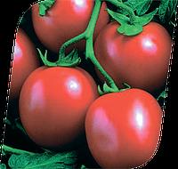 Семена томата Перфектпил F1 1000 семян Seminis