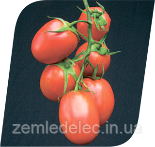 Семена томата Рапит F1 1000 семян Seminis