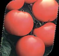 Семена томата Дебют F1 1000 семян Seminis