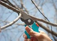 Обрізка дерев. Для чого це потрібно. Правила обрізки дерев.