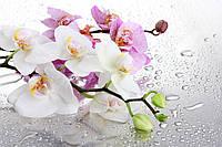 """3D Фотообои флизелиновые """"Орхидеи на белом фоне"""""""
